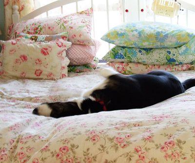 Doggie5
