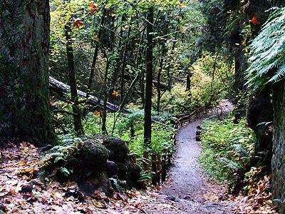 Woods28