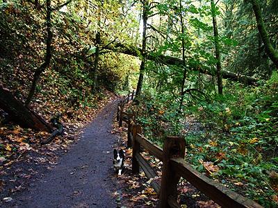 Woods29