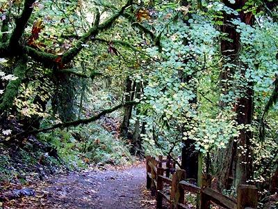 Woods36