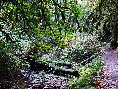 Woods38