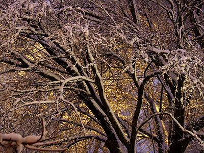 Snowy8