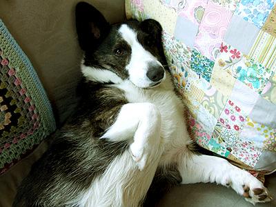 SleepyDog1