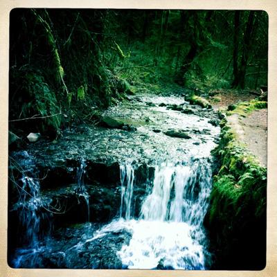 Woods5