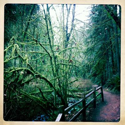 Woods19