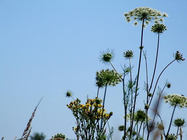 Meadow7