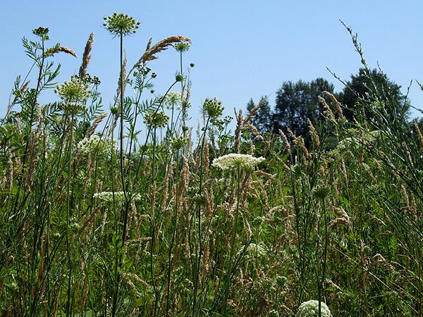 Meadow9