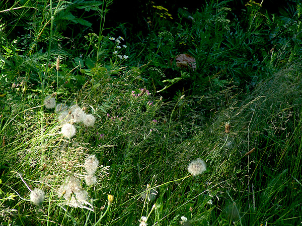 Meadow19