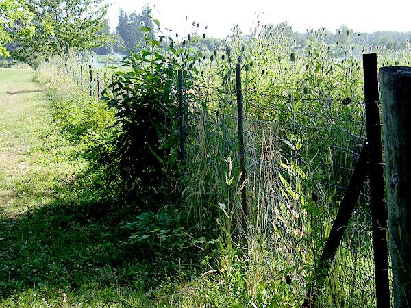 Meadow30