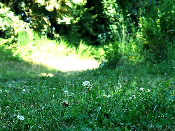Meadow14