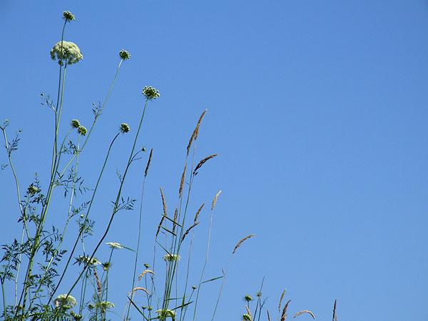 Meadow15
