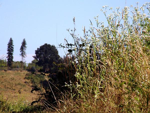 Meadow11