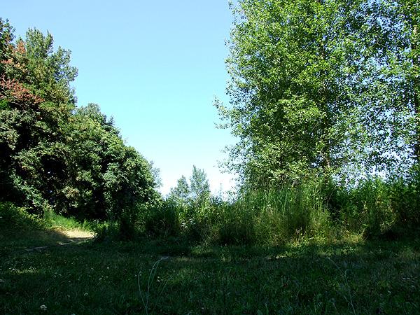 Meadow16
