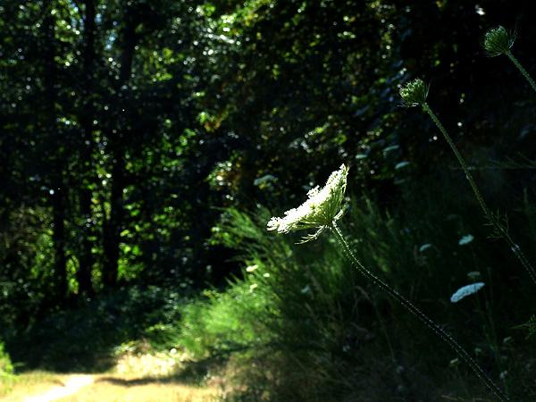 Meadow26