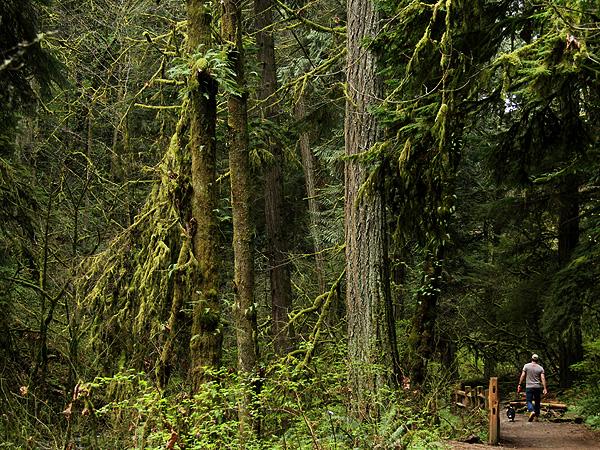 Woods35