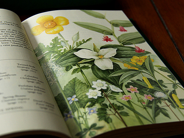 HowToKnowTheWildFlowers