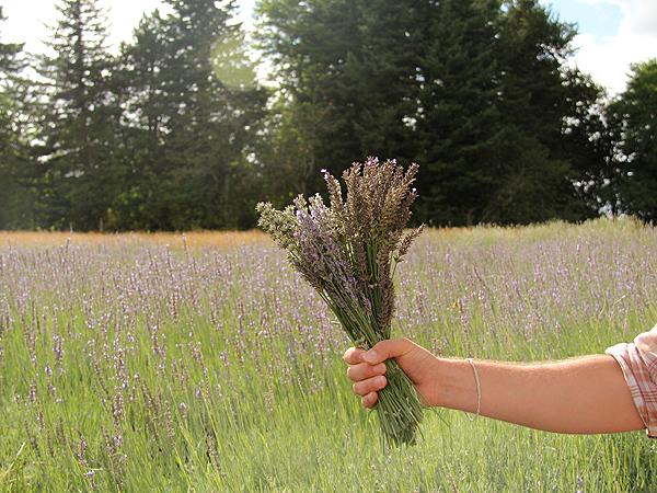 Lavender20