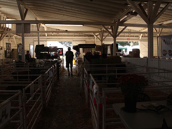 SheepShow1