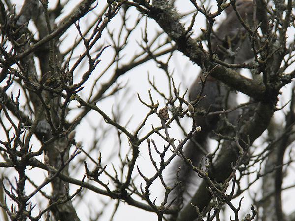 22SpotTheSquirrel1