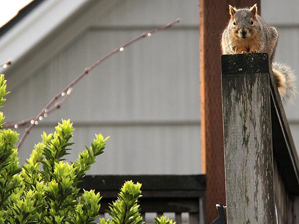 6Squirrel1