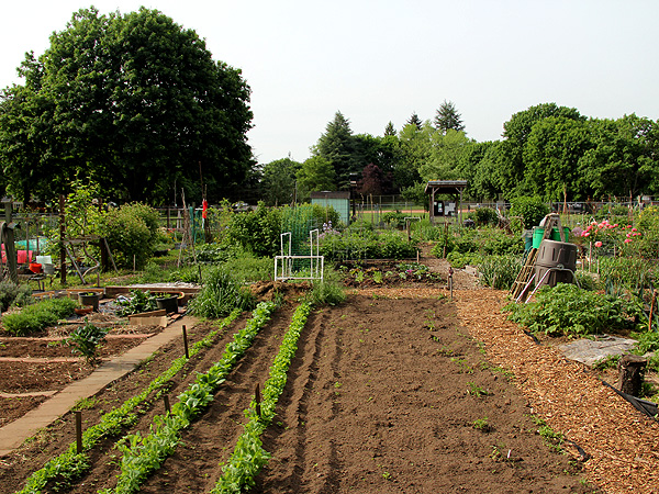 15CommunityGarden2