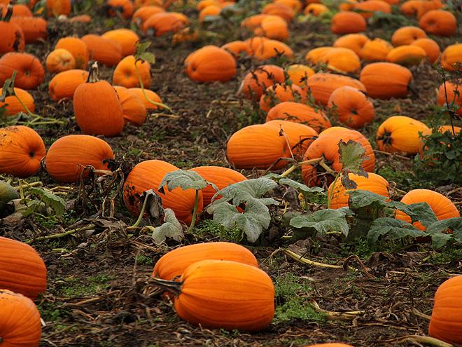 12Pumpkins7