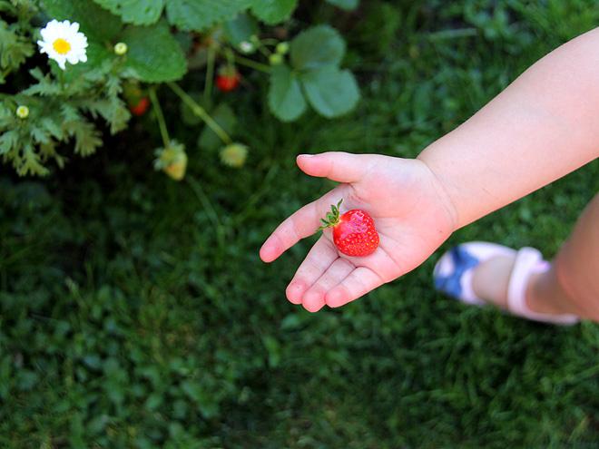 7Strawberries3