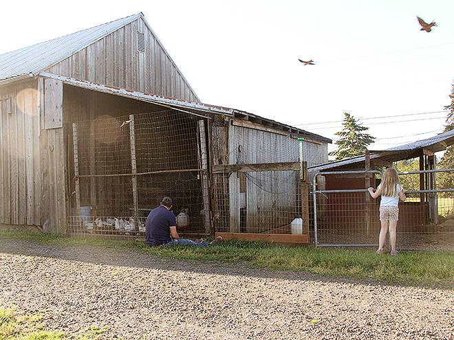 Farm33