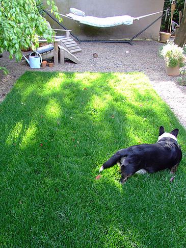Garden6. An Area Rug ...