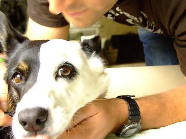 Greatdog2