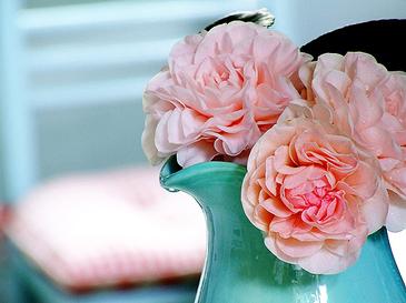 Camellia2_2