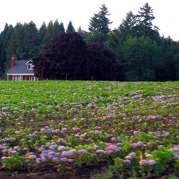 Farm19