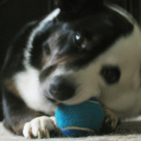 Audreywithball