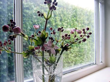 Blooming2_1
