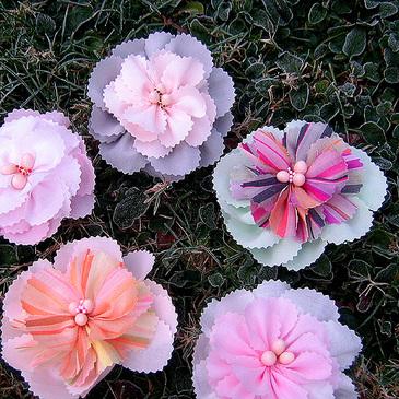 Frostflowers3