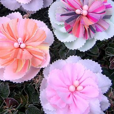 Frostflowers5