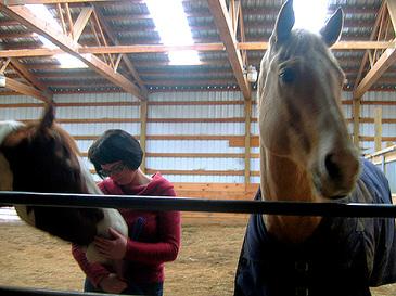 Horsefarm1