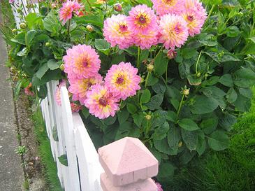 Picketflowers